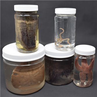 Echinoderm Survey Set