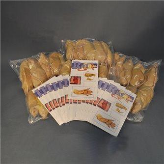 Rat Economy Class Pack