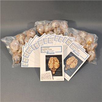 Brain Economy Class Pack