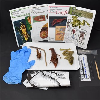 Animal Anatomy Kit
