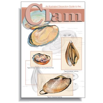 Dissection Guide - Clam