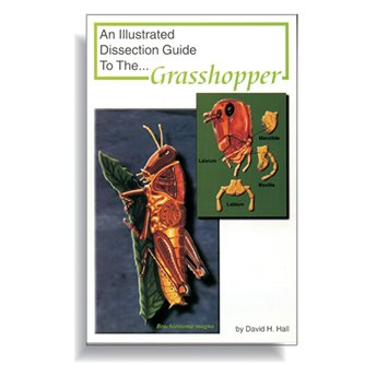 Dissection Guide - Grasshopper