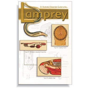Dissection Guide - Lamprey