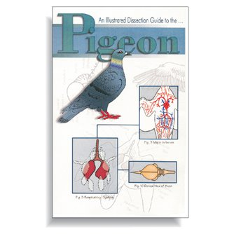 Dissection Guide - Pigeon