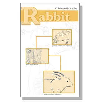 Dissection Guide - Rabbit
