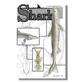 Dissection Guide - Shark