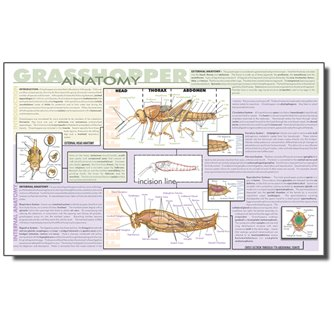 Dissection Mat - Grasshopper