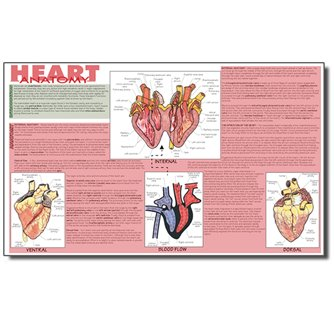 Dissection Mat - Mammalian Heart