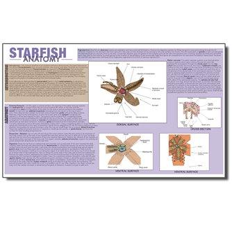 Dissection Mat - Starfish