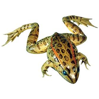 Grassfrog - Formalin Free Plain