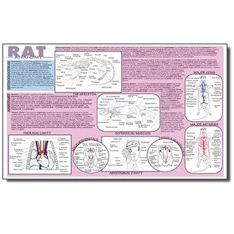 Dissection Mat - Rat