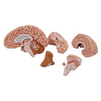 Brain 5 - Part