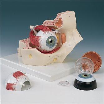 Eye In Orbit 7-Part