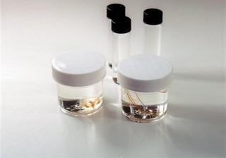 Hydrozoan Survey Set