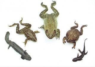 Amphibian Survey Set