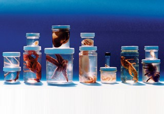 Comparative Invertebrate Set