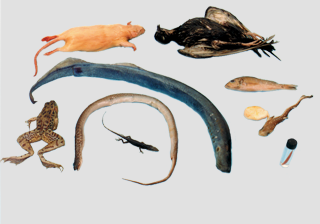 Comparative Vertebrate Set