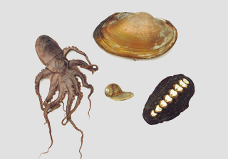 Mollusc Survey Set