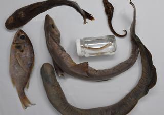 Pisces (Fish) Survey Set