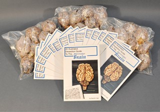 Economy Mammalian Brain