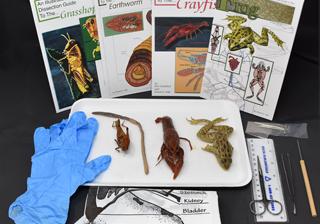 Animal Anatomy Kit