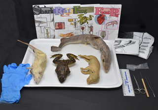 Comparative Vertebrate Anatomy Kit
