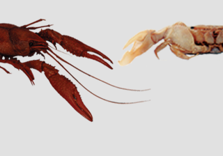 Crayfish , Insects & Other Athropoda