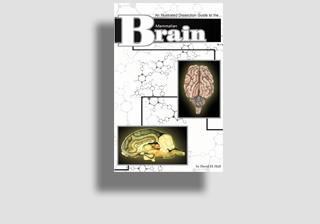 Mammalian Brain