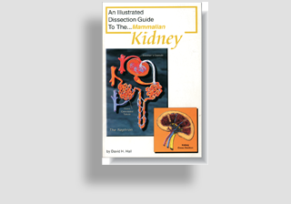 Mammalian Kidney