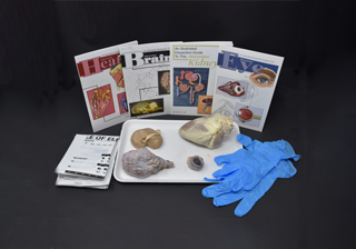 Mammalian Organ Kits