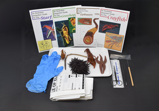Other Anatomy Kits