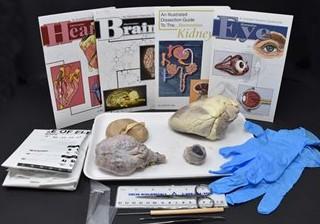 Comparative Mammalian Organ Kit