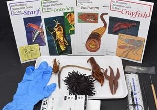 Basic Zoology Kit
